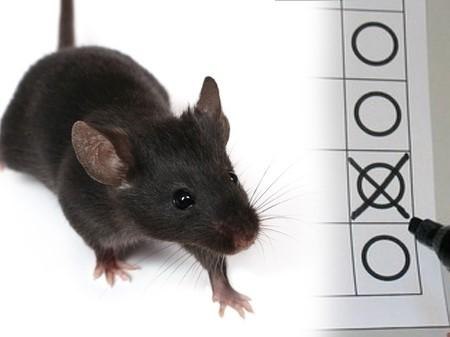 Maus auf Stimmzettel