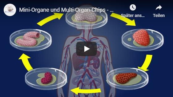 Animationsfilm Miniorgane und Multi-Organ-Chips